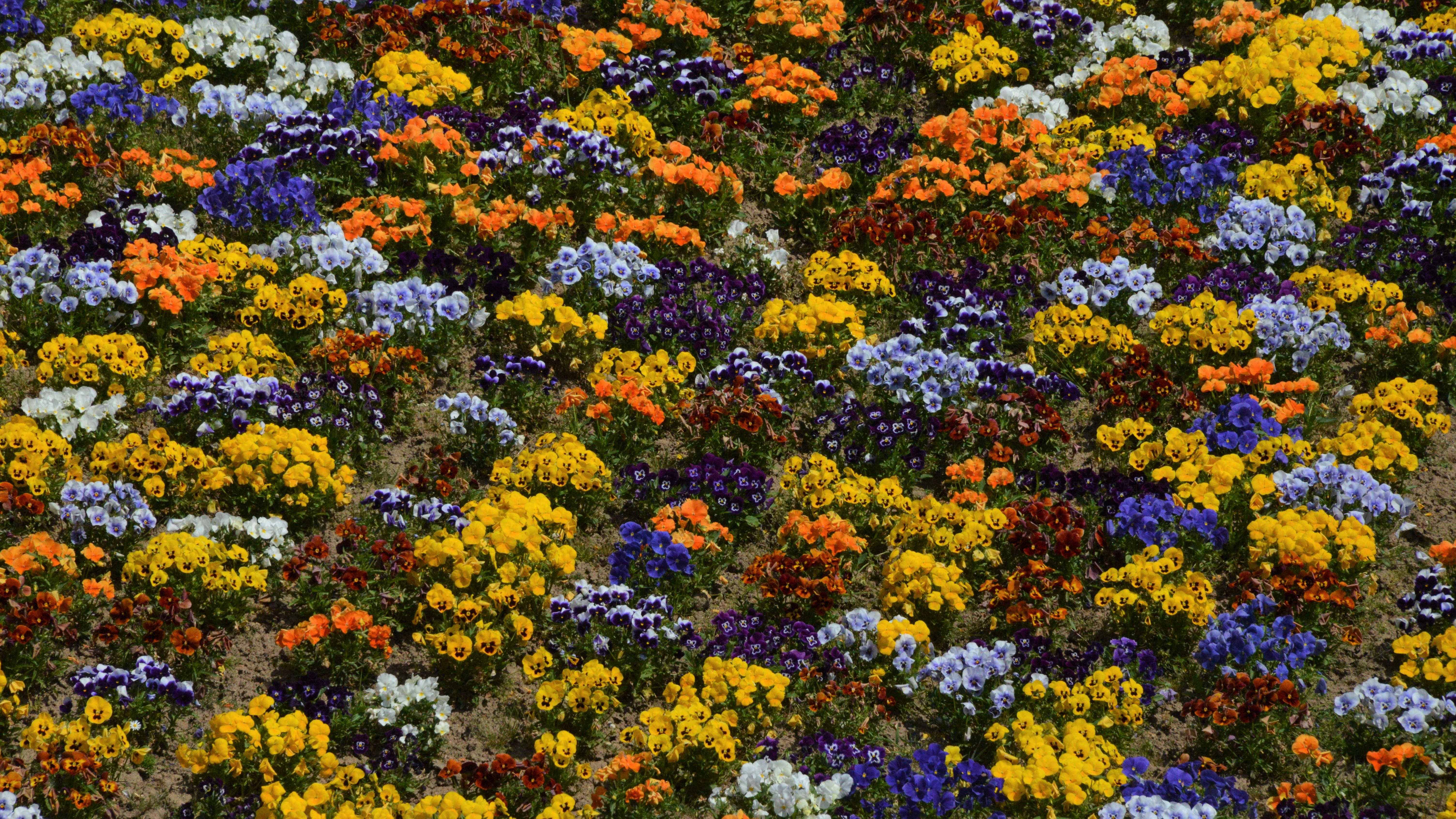 East Coast Flowers