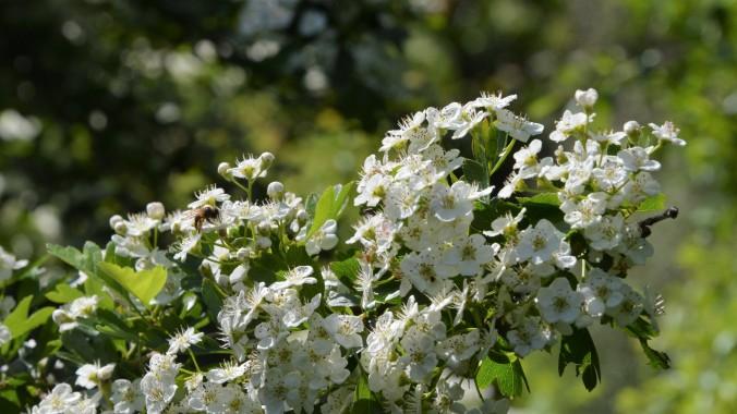 Gorey Flowers